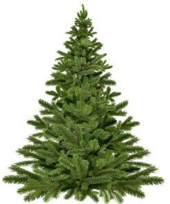 Juletræ leveret til døren